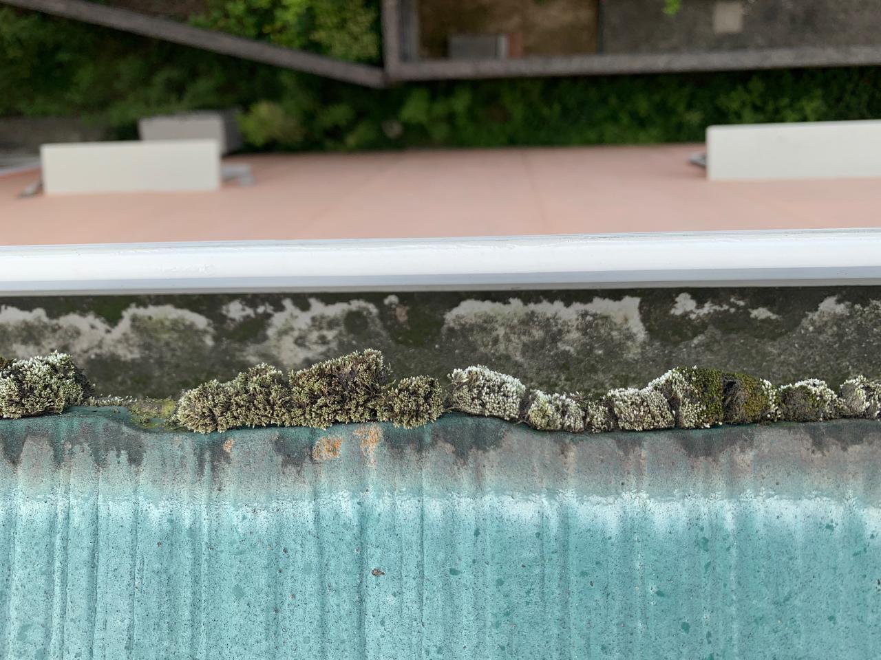 苔が繁殖しているスレート屋根の様子