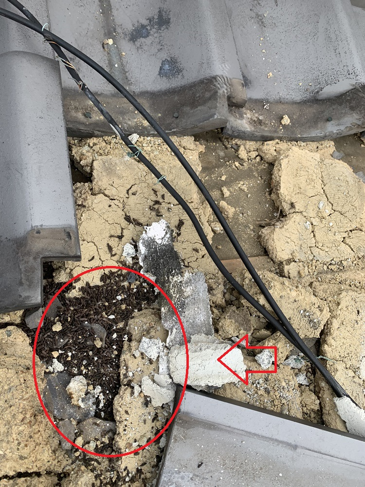 瓦屋根の中にコウモリの糞が残っている様子
