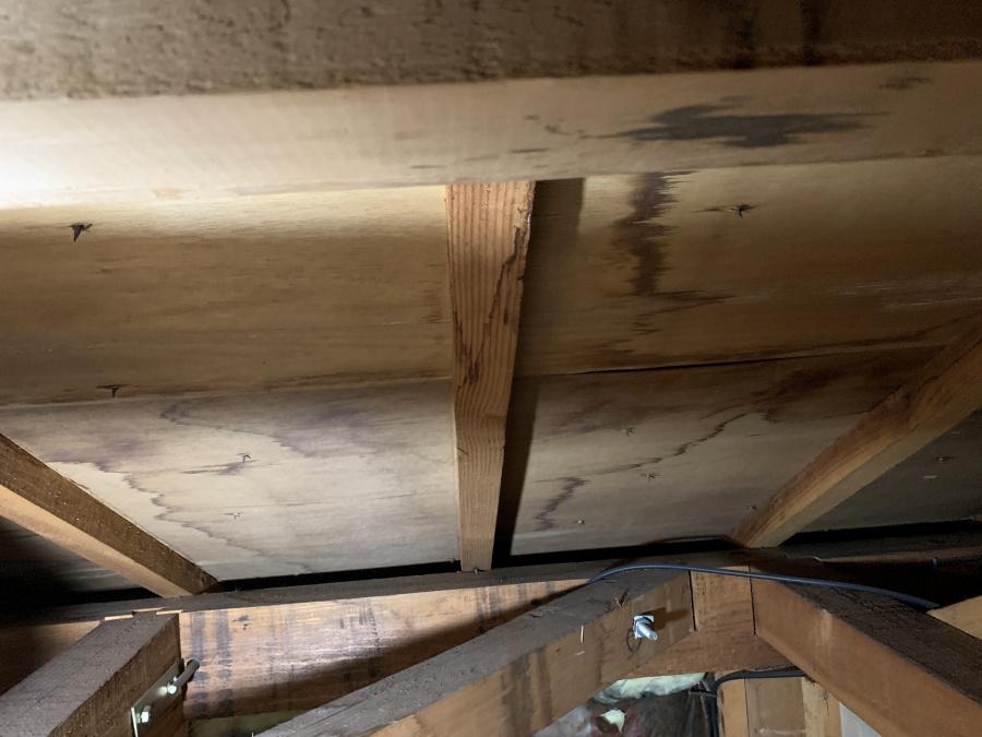 天井裏の様子