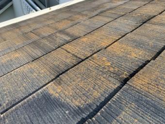 屋根に苔が生えている様子