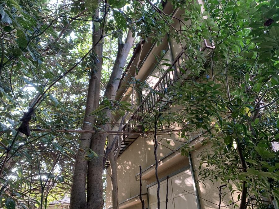 木が隣接したお家の様子