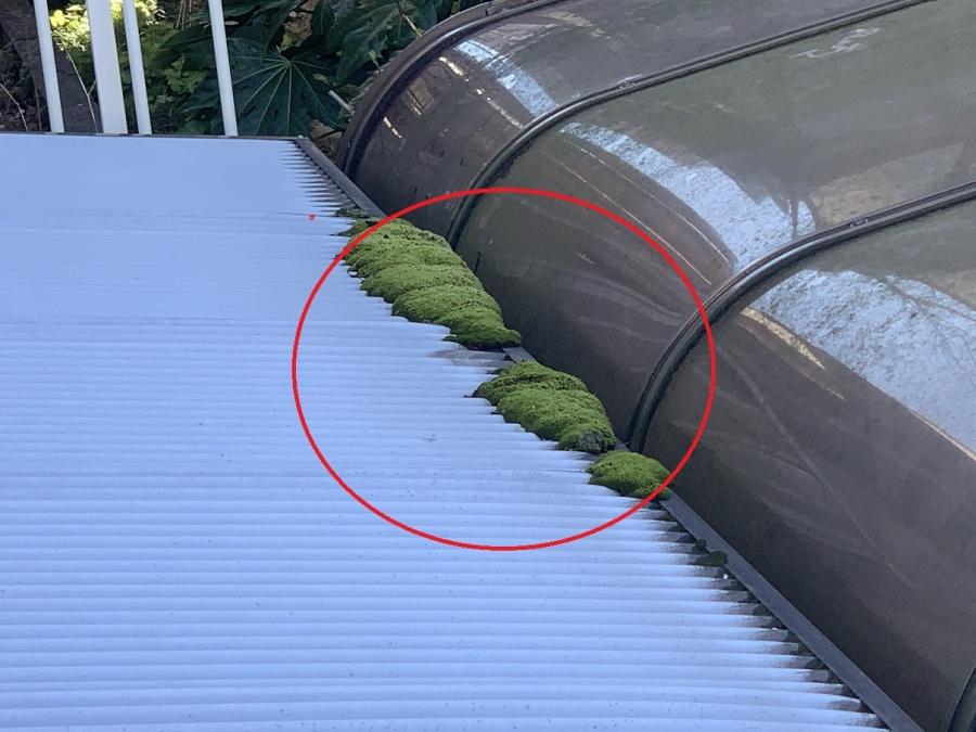 波板に設けられている雨樋に苔が詰まっている様子
