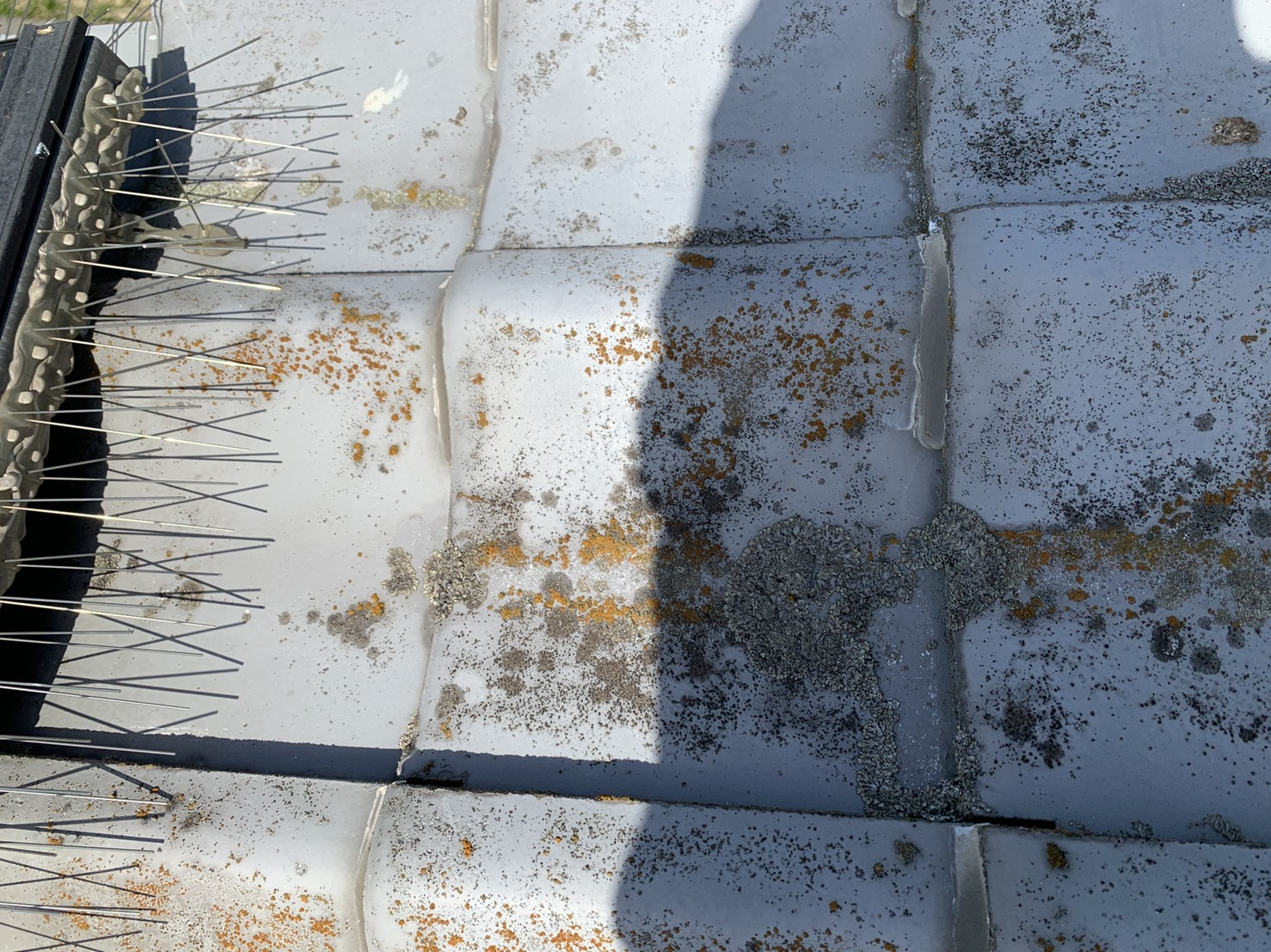 加古郡稲美町で雨漏り調査で発見した瓦屋根表面に発生している苔の様子