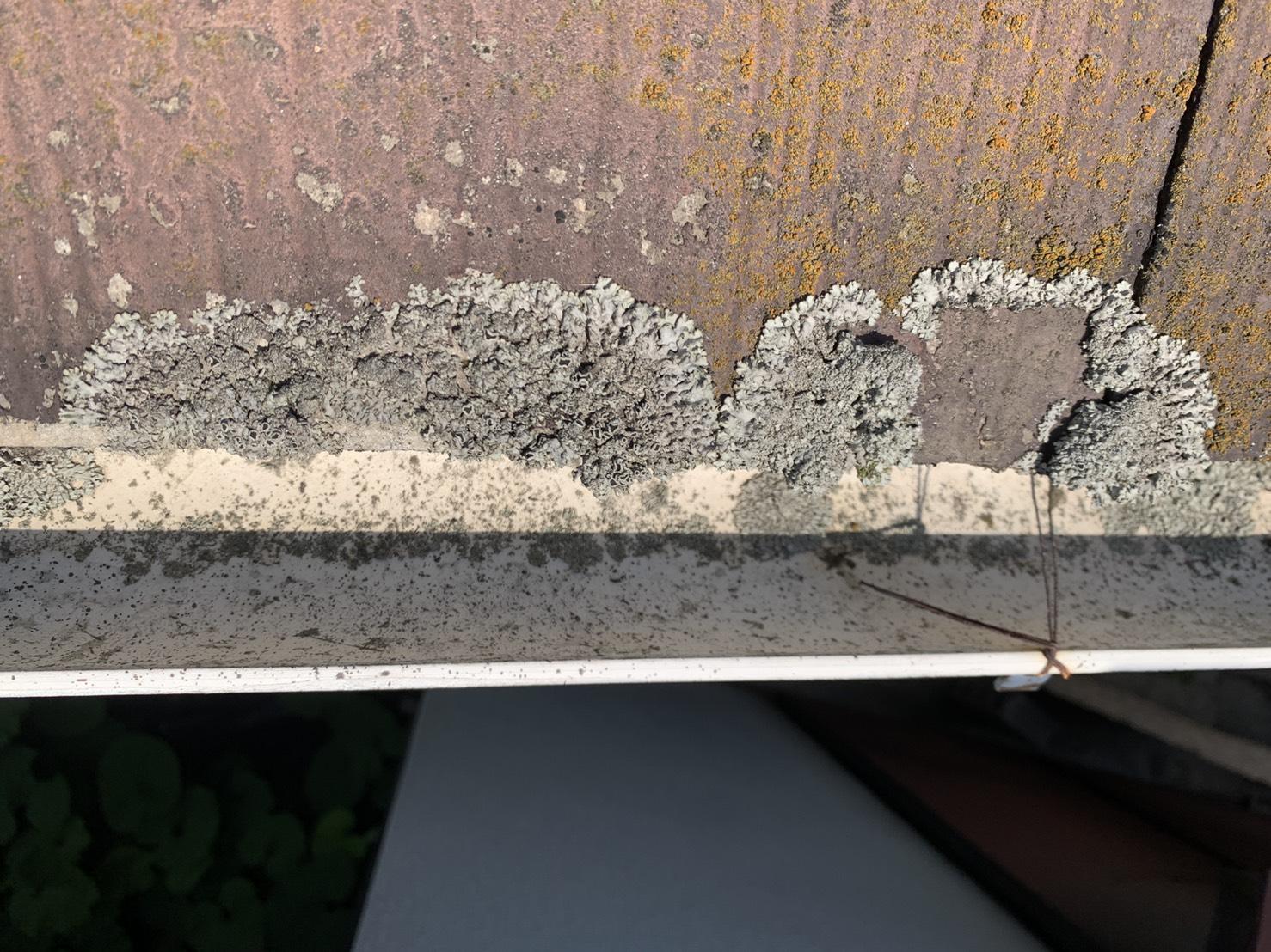 加古川市での屋根診断でスレート屋根に苔が繁殖している様子