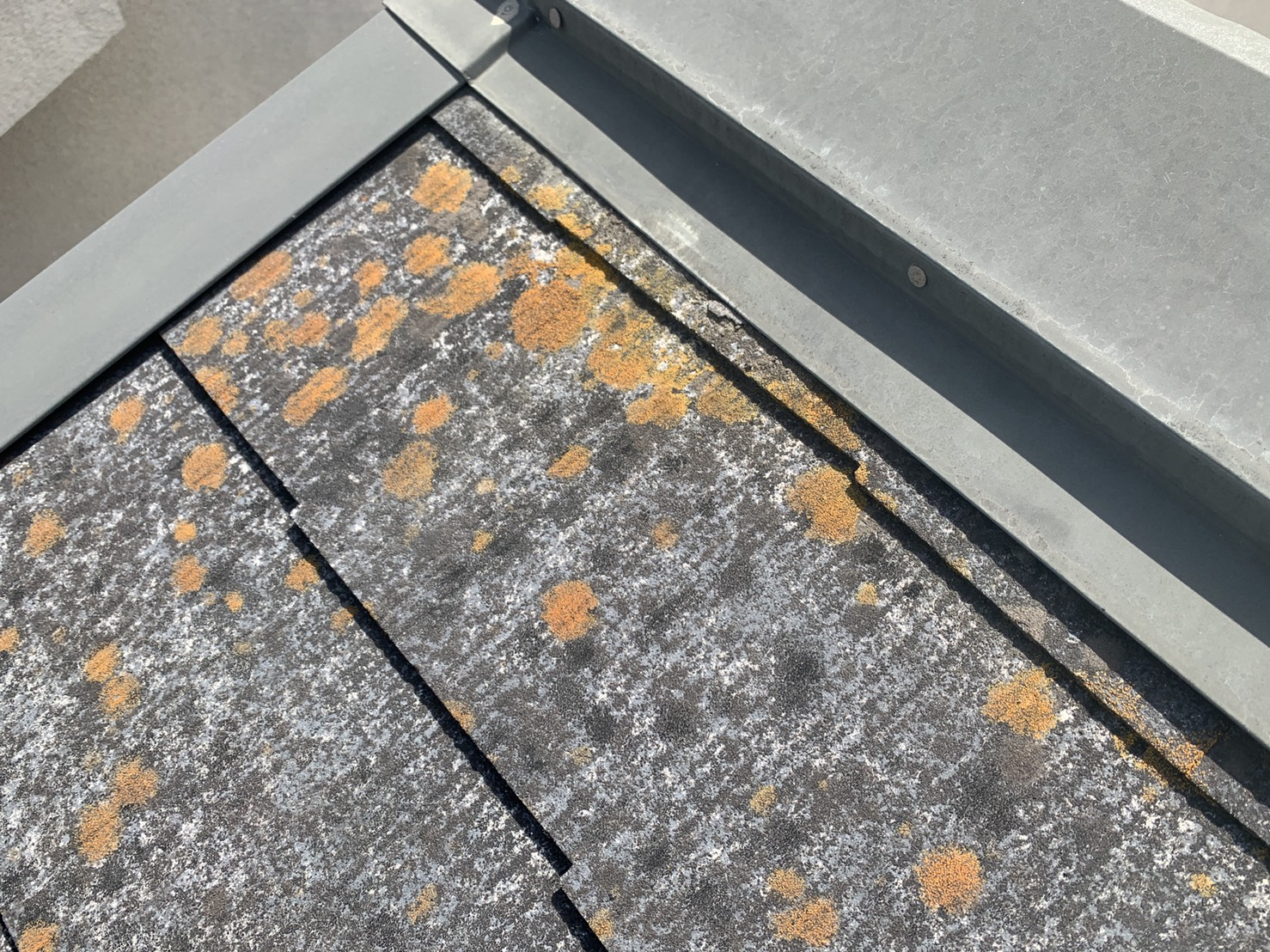 三田市でのスレート屋根調査でスレート屋根の表面に苔が生えている様子