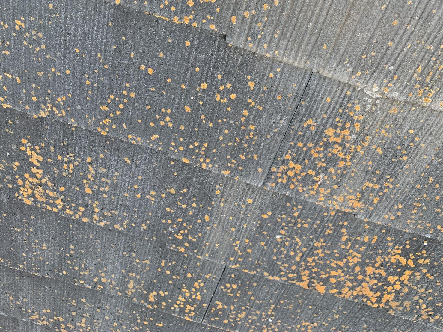 明石市での屋根診断でスレート屋根の表面に出来た苔の様子