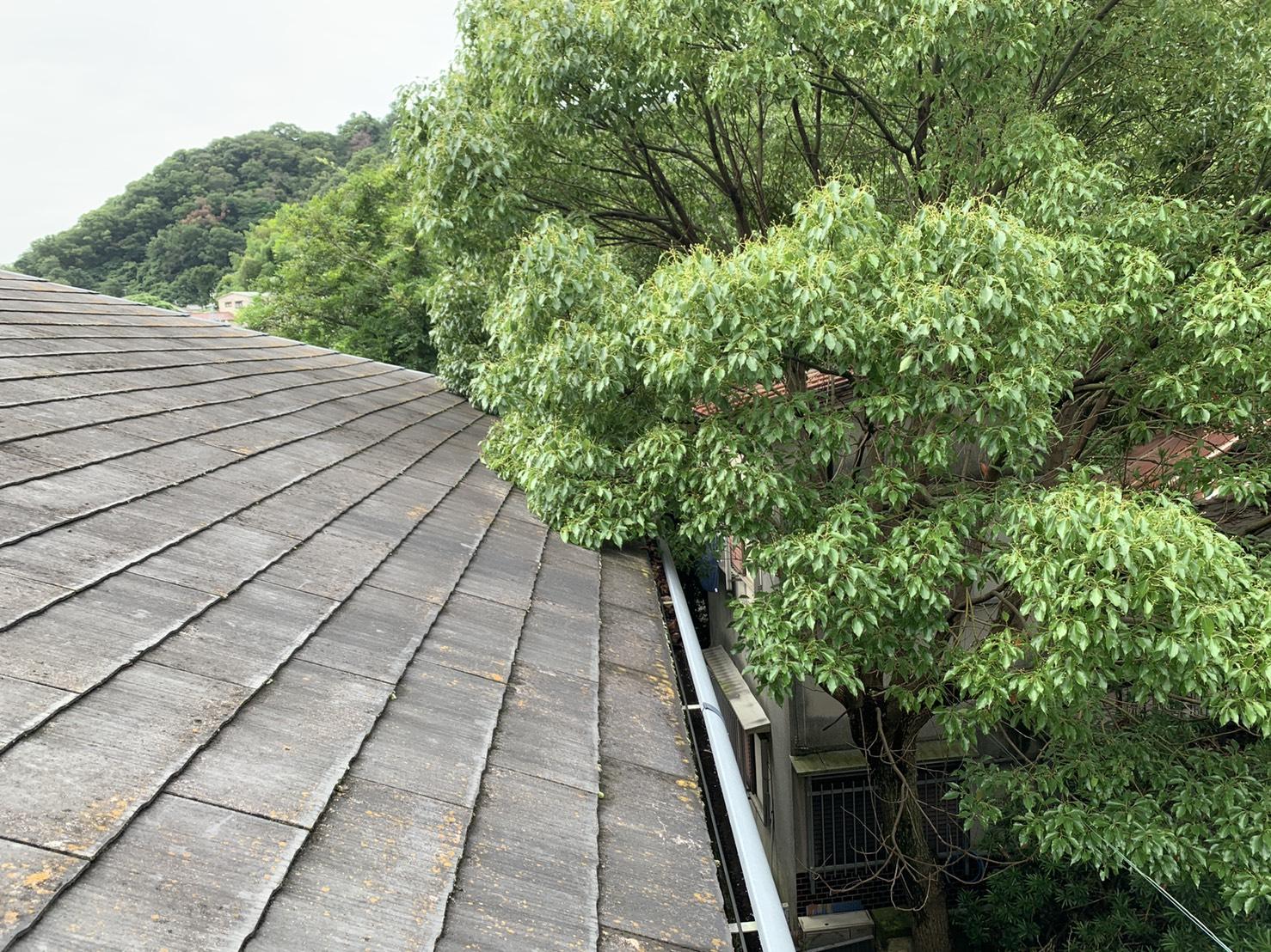 雨樋からの水漏れ調査で見た屋根上に生い茂った木の様子
