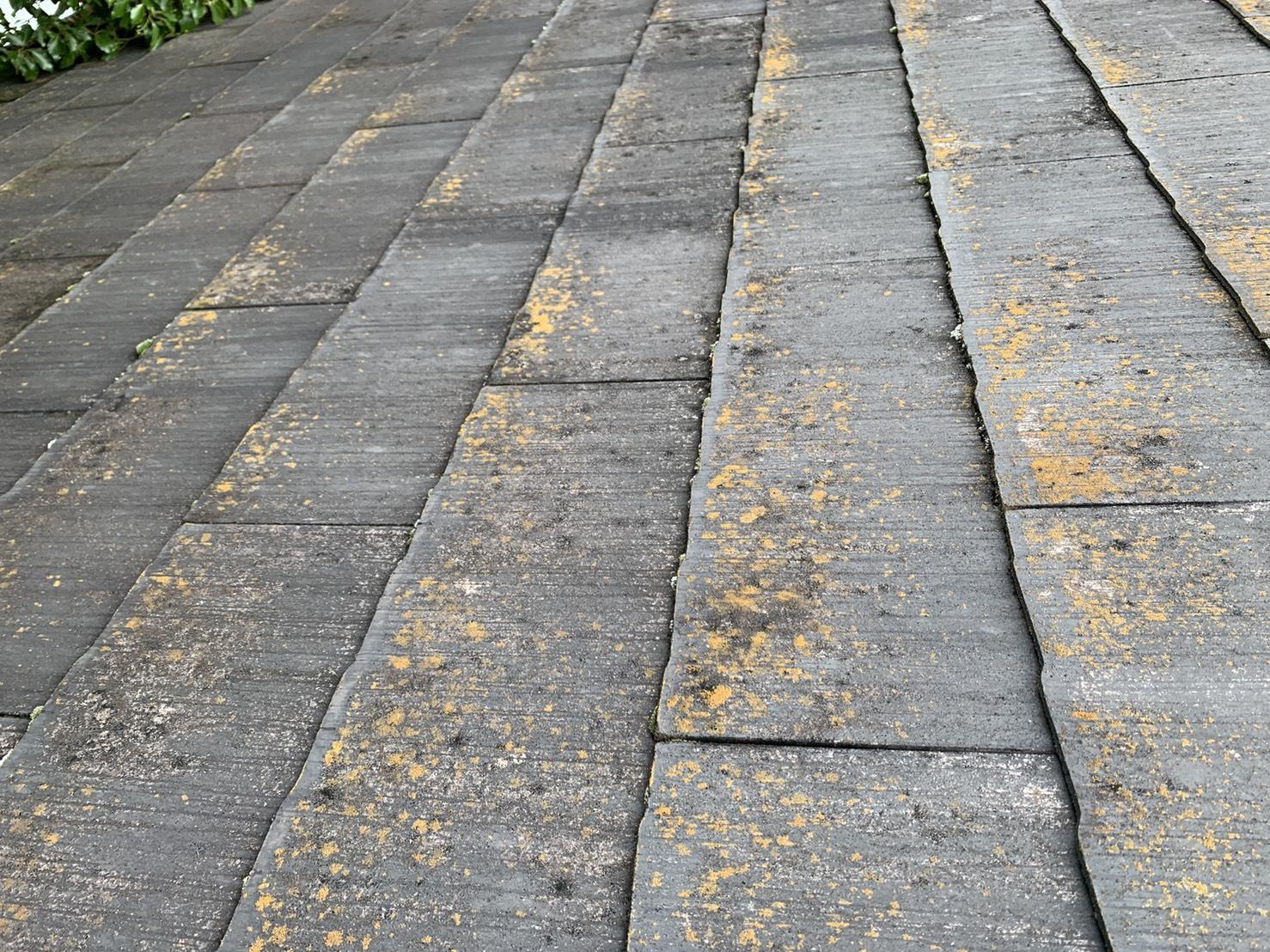 雨樋の詰まりの原因となる屋根上の苔