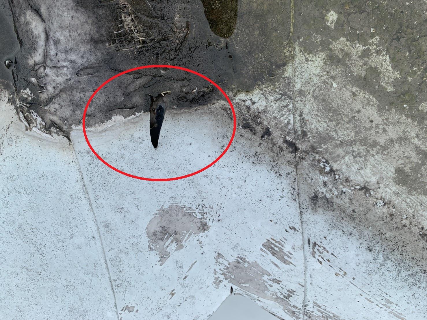 三木市で屋上防水のお見積もりを行ったシート防止に穴が開いている様子