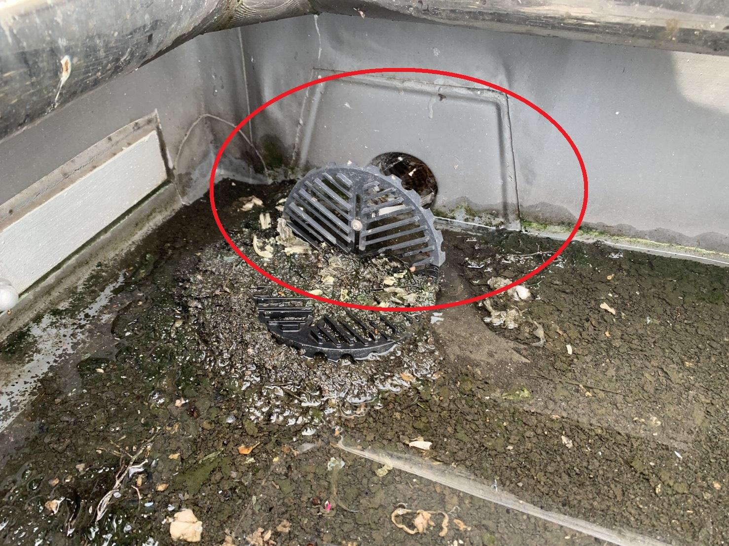 神戸市のビルの屋上で排水溝が詰まっている様子