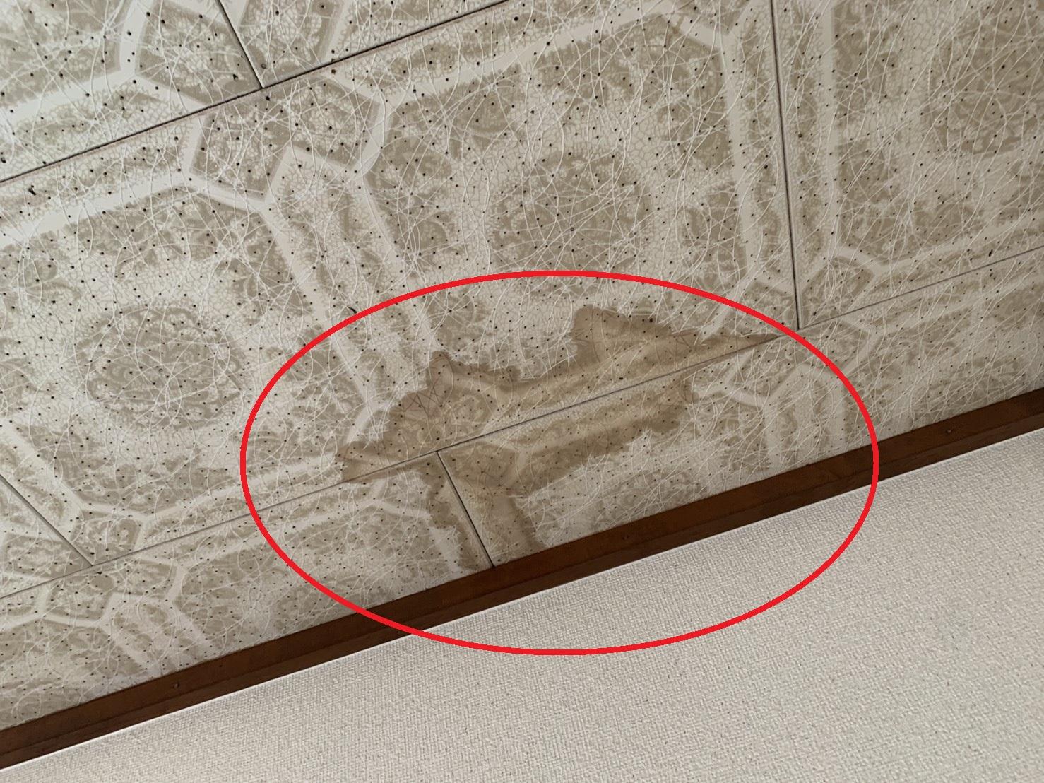 雨漏りで天井にシミが出来ている様子