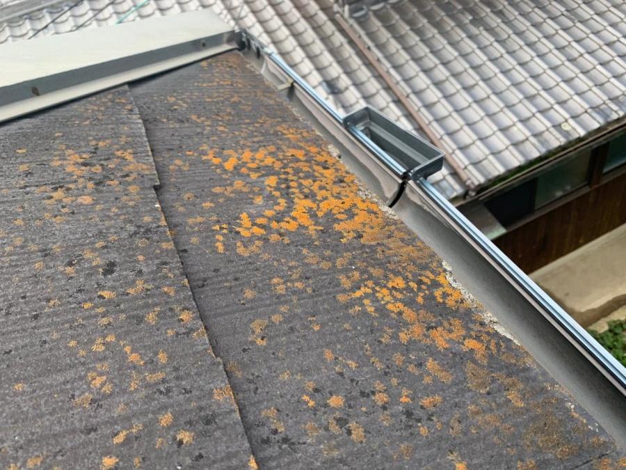 スレート屋根に苔が生えている様子